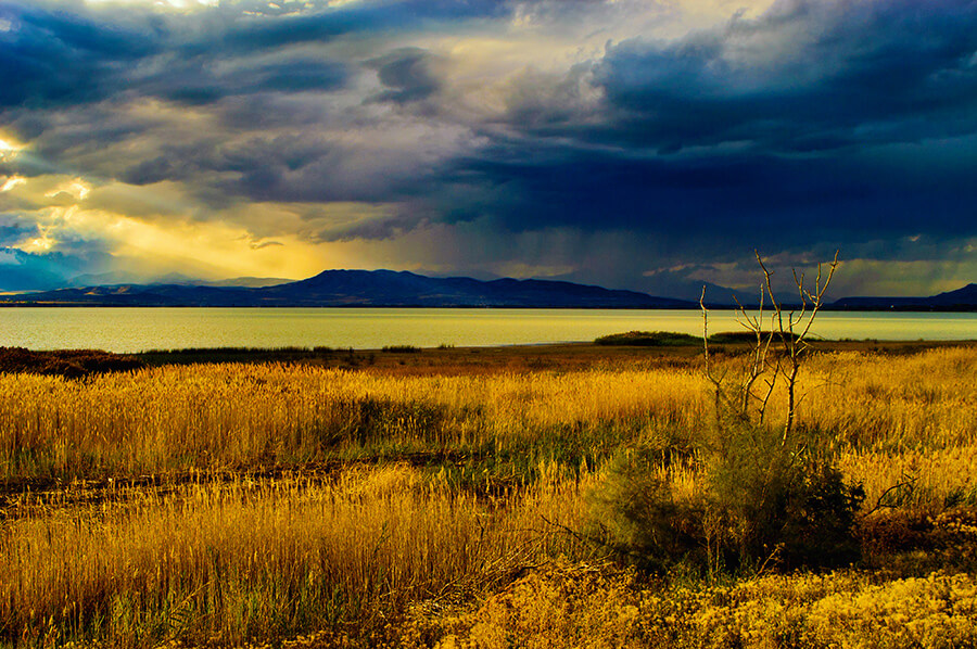 The Reeds and Rushes and Osiers - 20 x 30 lustre print by Tanner Young