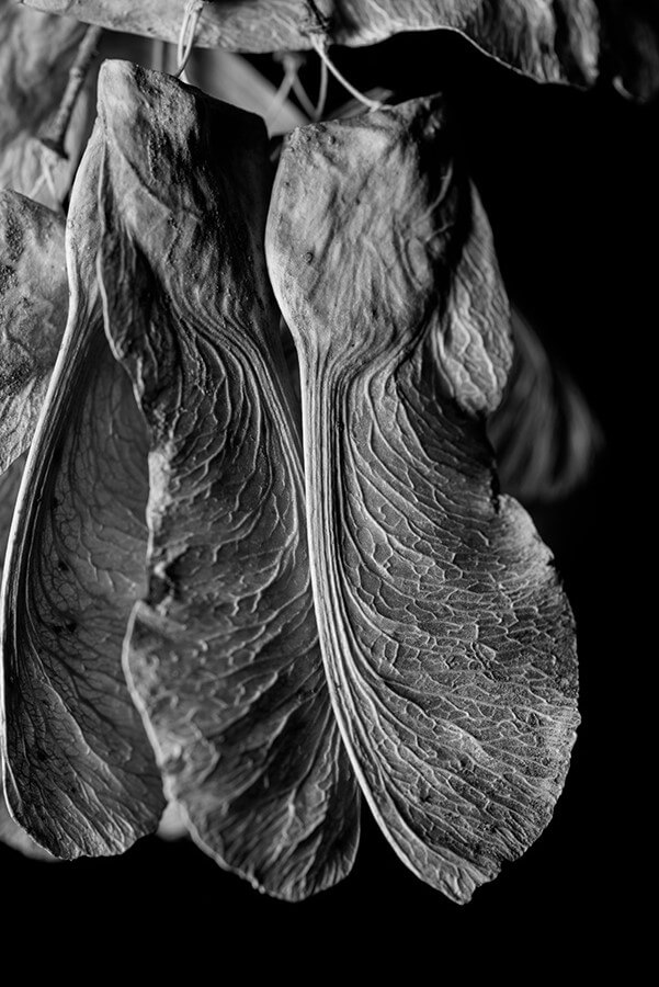 Dried Seeds, II - 16 x 24 lustre print by Tanner Young