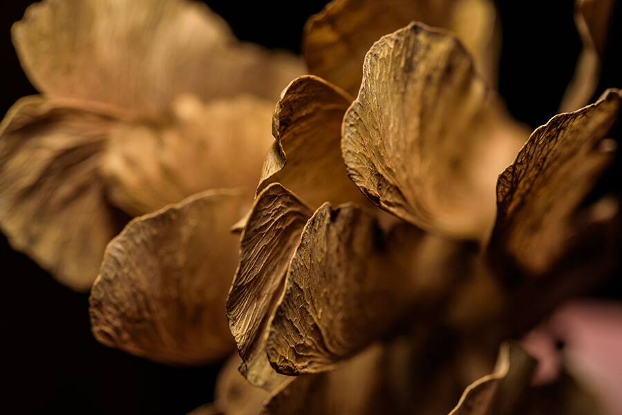 Dried Seeds, III - 16 x 24 lustre print by Tanner Young