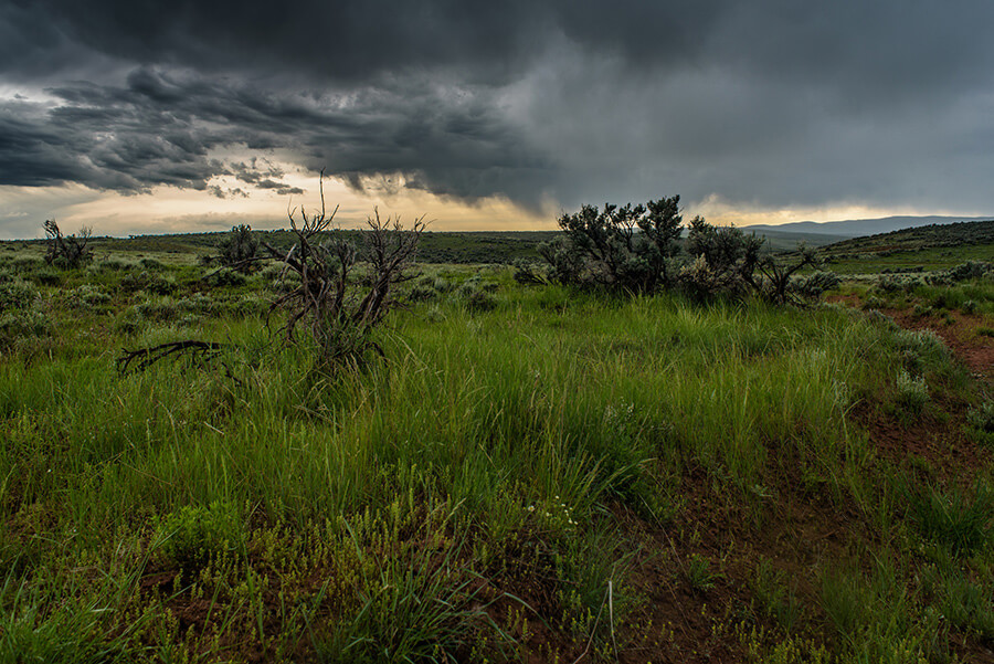 Grasslands and Sagebrush - 40 x 60 giclée on canvas (unmounted) by Tanner Young