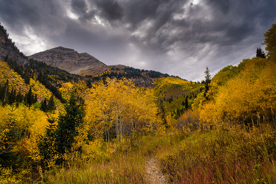 Autumn Trail - 20 x 30 giclée on canvas (unmounted) by Tanner Young