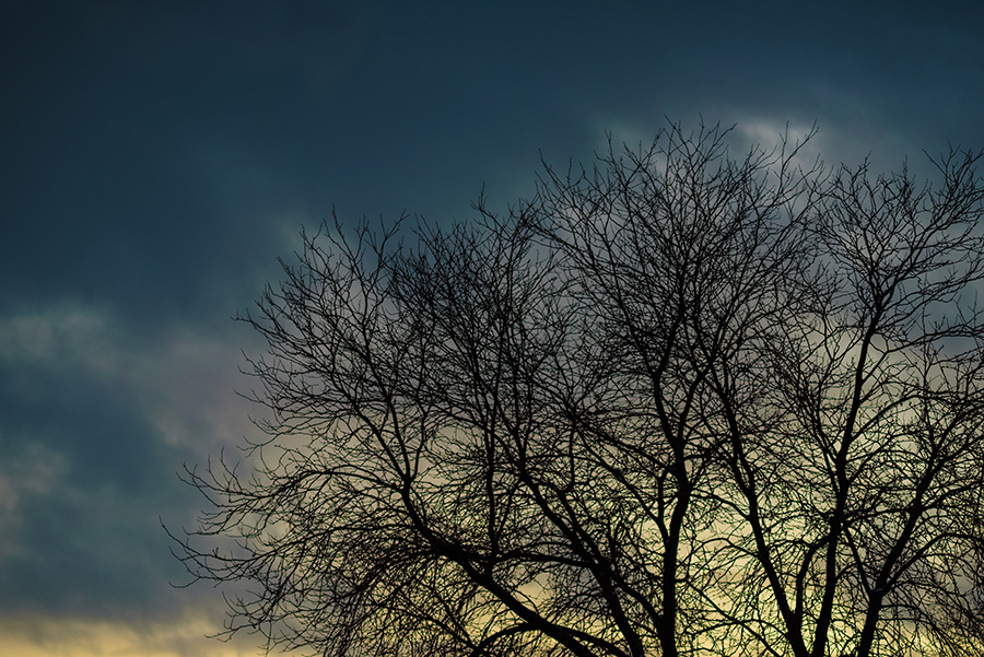 Winter Tree - 40 x 60 lustre print by Tanner Young