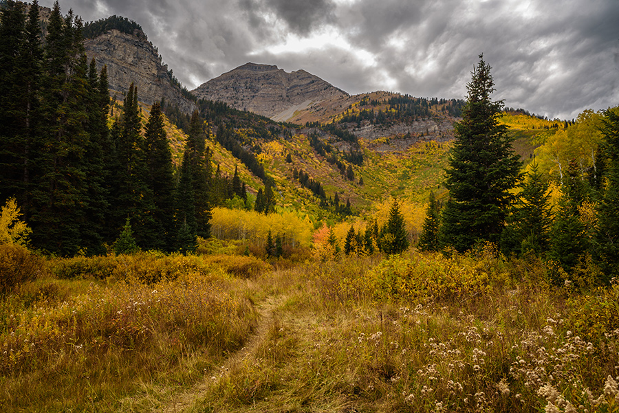 Mountain Path - 20 x 30 giclée on canvas (unmounted) by Tanner Young