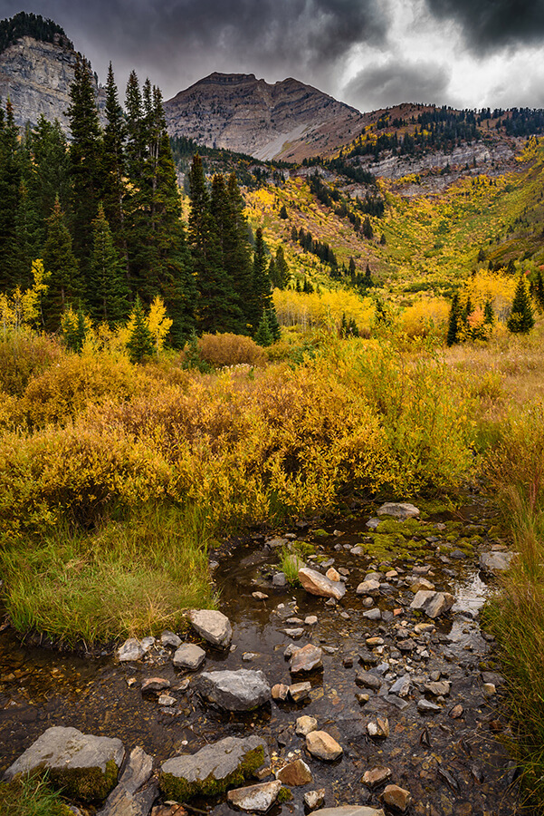 Mountain Stream - 20 x 30 giclée on canvas (unmounted) by Tanner Young