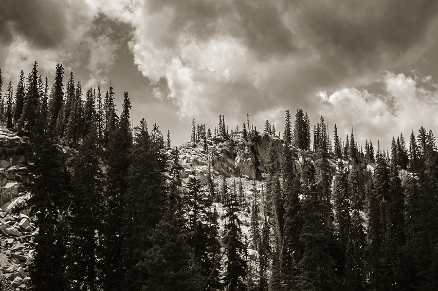 Near the Treeline - 16 x 24 lustre print by Tanner Young