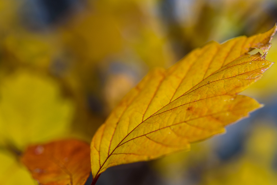 Autumn Color - 24 x 36 giclée on canvas (unmounted) by Tanner Young