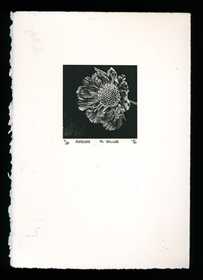 Scabiosa - Limited Edition Lithography Print by Al Young