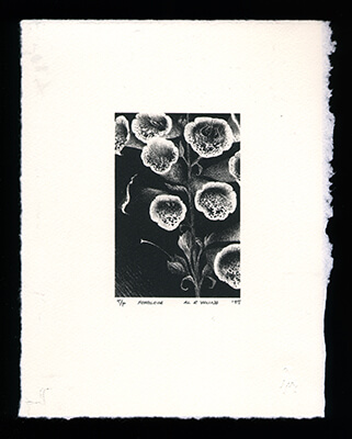Foxglove - Limited Edition Lithography Print by Al Young