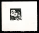 Nasturtium - Limited Edition Lithography Print