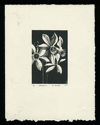 Narcissus on gray paper - Limited Edition Lithography Print by Al Young