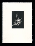 Unfurling - Limited Edition Lithography Print