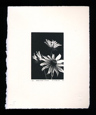 Black-eyed Susan - Limited Edition Lithography Print by Al Young