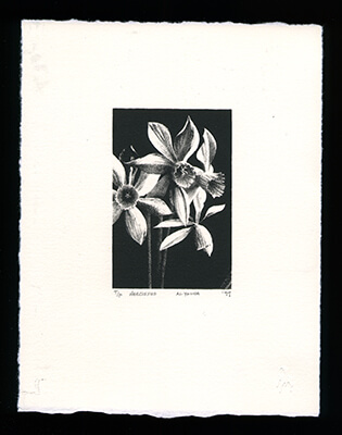 Narcissus on beige paper - Limited Edition Lithography Print by Al Young