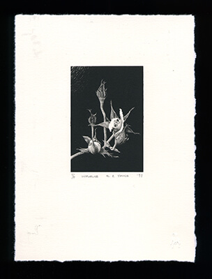 Unfurling - Limited Edition Lithography Print by Al Young