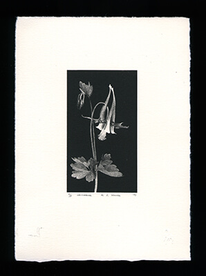 Columbine - Limited Edition Lithography Print by Al Young
