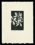 Narcissus on gray paper - Limited Edition Lithography Print
