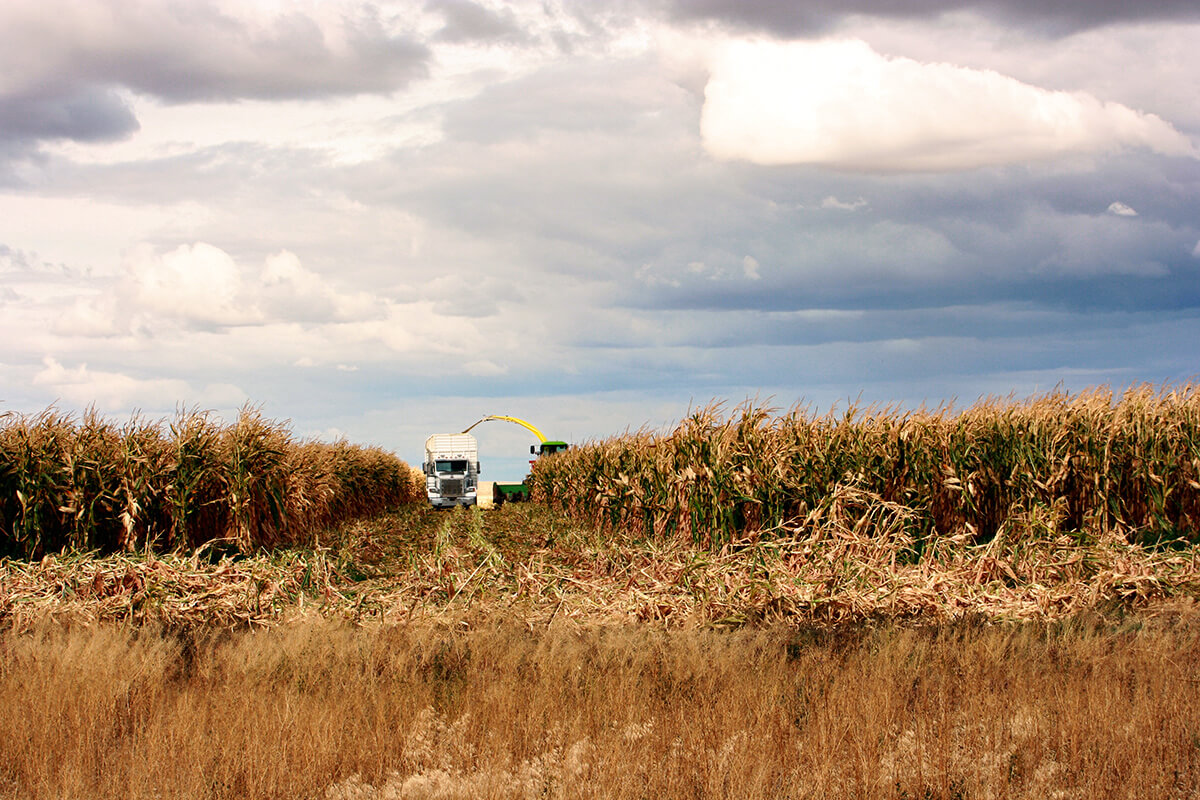 As the days begin to shorten and the temperatures become cooler, the corn or wheat is ready to be ha...