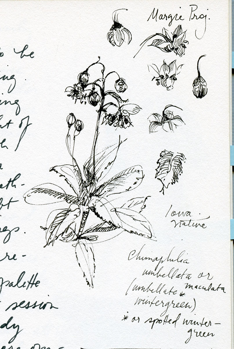 Flora study in pen and inkby Elspeth Young