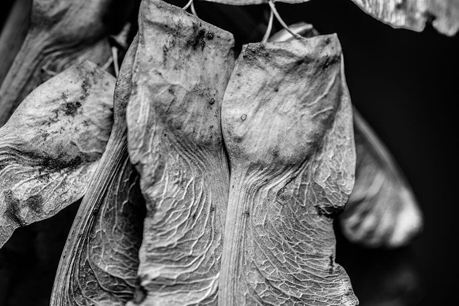 Dried Seeds, I