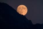 Moon through the treetops