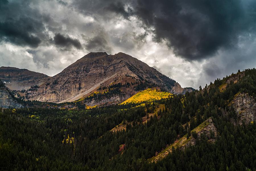 Aspens Below the Summit